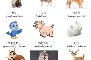 Bộ từ vựng tiếng Nhật có chủ đề về động vật