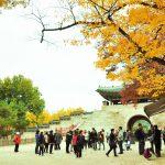 Học tiếng Hàn và những thành công trong tương lai
